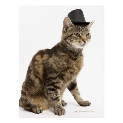 Sombrero de copa que lleva del gato postal