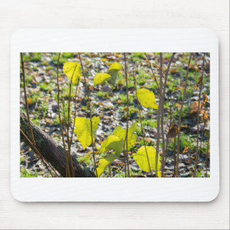 Some autumn green leaves mouse pad