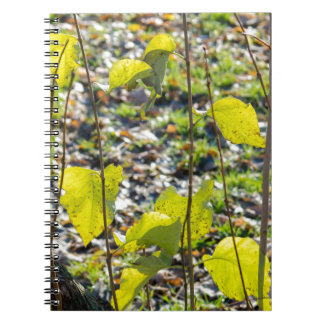 Some autumn green leaves spiral notebook