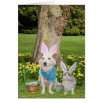 Some Bunnies Love You! Card