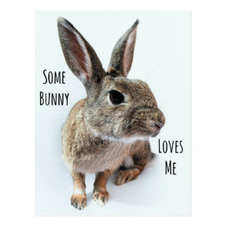 Some Bunny Loves Me Collection Rabbit Easter Postcard