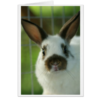 """""""some""""bunny"""" loves you""""-2 card"""