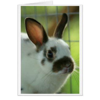 """""""some""""bunny"""" loves you"""" card"""