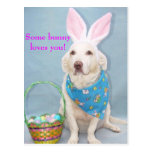 Some bunny loves you! postcards