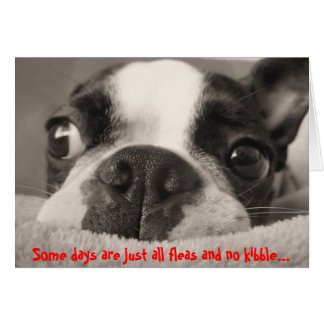 Some days are just all fleas and no kibble greeting card