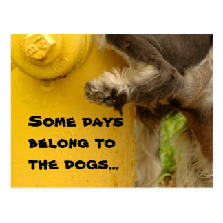 Some days belong to the dogs... postcard