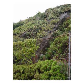 Some Plant-Overgrown Steps At Alcatraz Prison Park Postcard