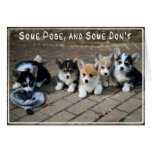 Some Pose, Some Don't ~ Corgi Puppies in a Row Greeting Card