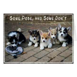 Some Pose, Some Don't ~ Corgi Puppies in a Row Greeting Cards