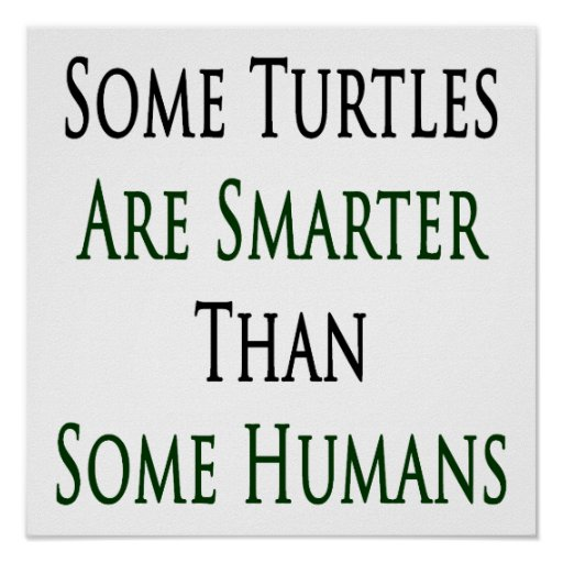 Some Turtles Are Smarter Than Some Humans Poster