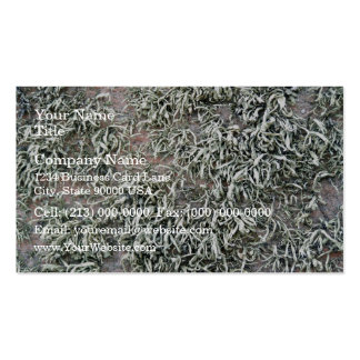 Some weird lichens on a rock Double-Sided standard business cards (Pack of 100)