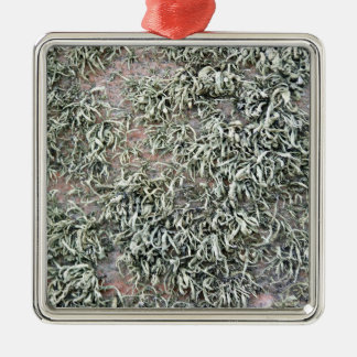 Some weird lichens on a rock square metal christmas ornament