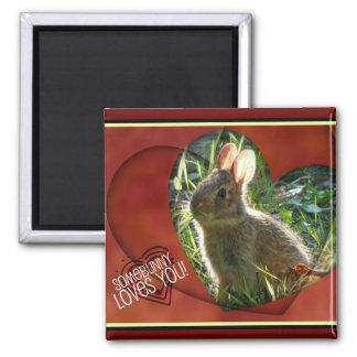 Somebunny Loves You! Bunny Photograph Magnet