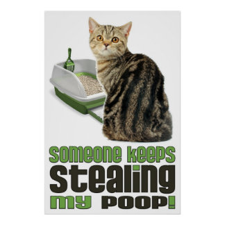 Someone Keeps Stealing My Poop cat lovers poster