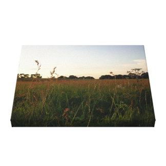 Somerset Sunset over a beautiful meadow Canvas Print