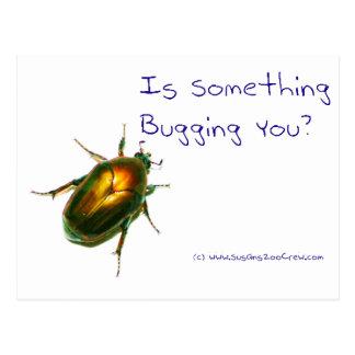 SomethingBuggingYou Postcard