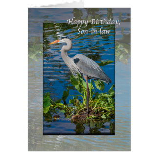 Son-in-law s Birthday Card with Great Blue Heron