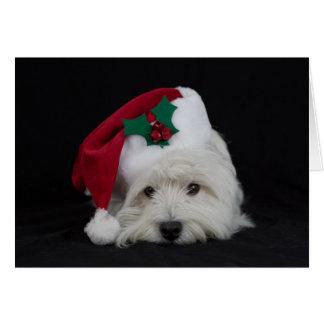 Soñador la tarjeta de Navidad molesta del westie