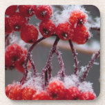 SONB Snow on Berries; No Text Coasters