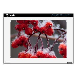 SONB Snow on Berries Samsung Chromebook Decals