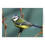 Song Bird Cards