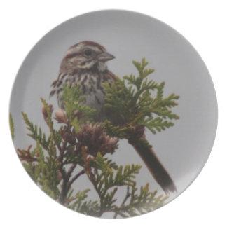Song Bird Dinner Plate