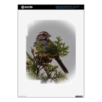 Song Bird Skins For iPad 3