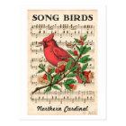 Song Birds Northern Cardinal Postcard