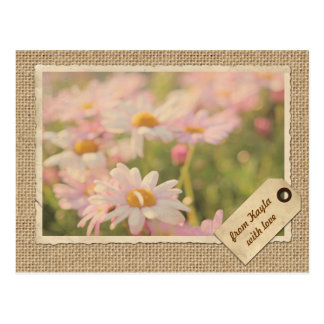 Song of Spring Lovely Pale Pink Daisies Asters Postcard