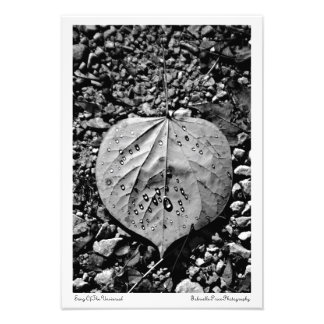 Song Of The Universal Art Print Photo