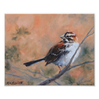 Song Sparrow Fine Art Print