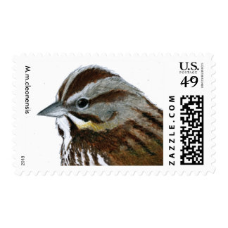 Song Sparrow (M.m.cleonensis) revised Postage Stamp