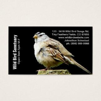 Song Sparrow Photograph Bird Biz Business Card