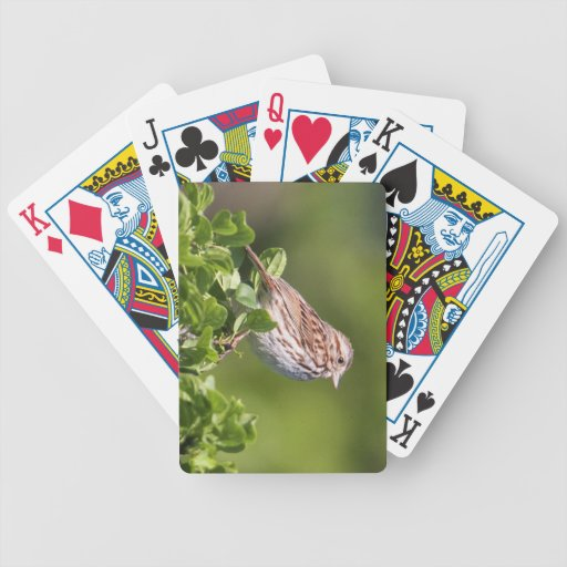 Song Sparrow Poker Cards