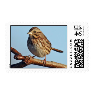 Song Sparrow Postage