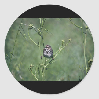 Song Sparrow Round Stickers
