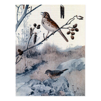 Song Sparrows in the Spring Postcard