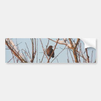 song thrush in bare tree bumper sticker