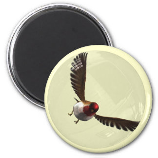 Songbird bubble magnet