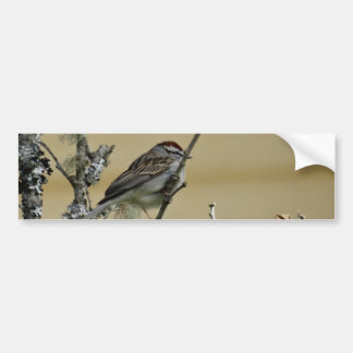 Songbird on branch, yellow wood background car bumper sticker