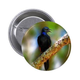 Songbird Starling blue bird Pin