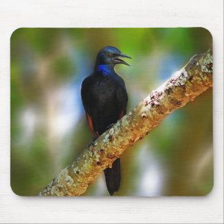 Songbird Starling blue bird Mouse Pad