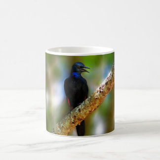 Songbird Starling blue bird Mugs
