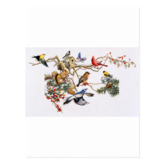 Songbirds on A Wing with Squirrel Postcard