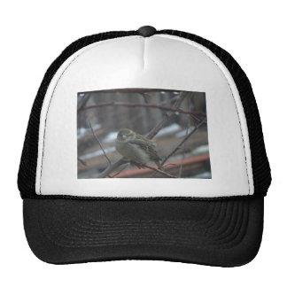 Songsparrow Hat
