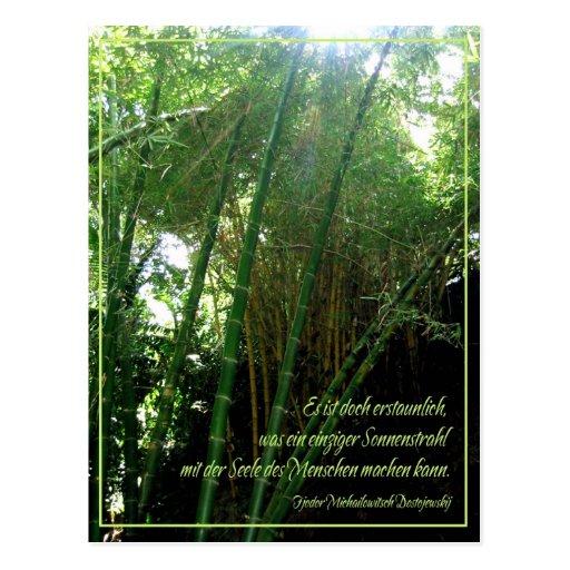 Sonnenstrahl Postcard