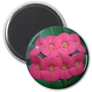 Sonoma 2 Inch Round Magnet