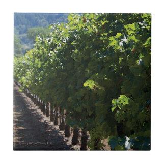 Sonoma County Vineyard - Ceramic Tile