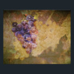 "Sonoma Grapes on Vine Photo Print<br><div class=""desc"">Beautiful digital painting of Sonoma Grapes on textured background by Arlene Eisen.</div>"