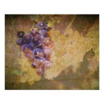 Sonoma Grapes on Vine Photo Print